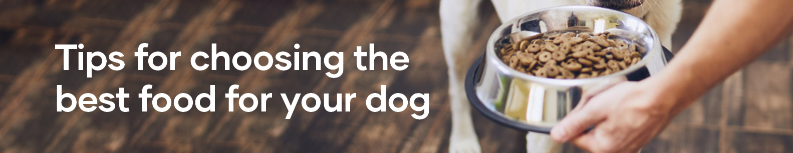Tips for choosing the best food for your dog