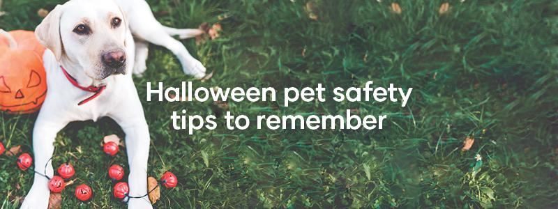 Halloween pet safety tips to remember
